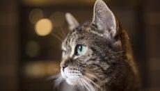 How Do You Check Your Cat's Symptoms?
