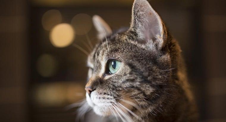 check-cat-s-symptoms