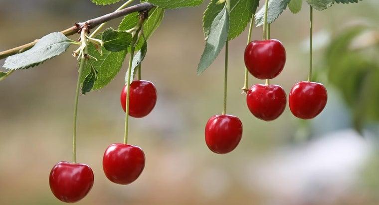 cherries-type-berry
