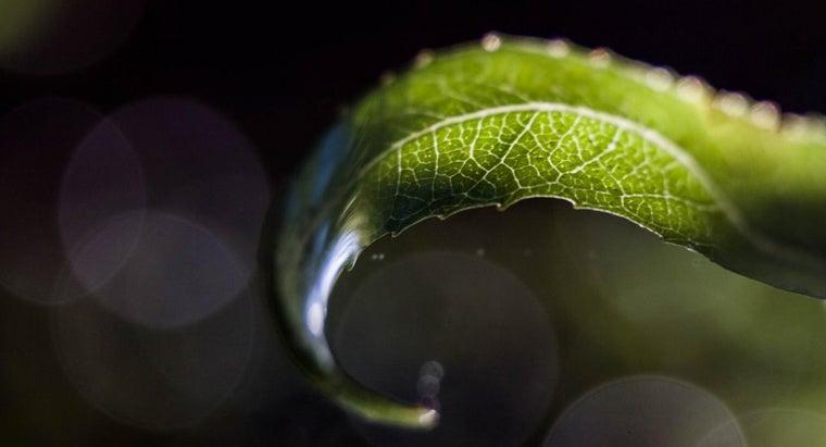 chlorophyll-make-leaf-look-green