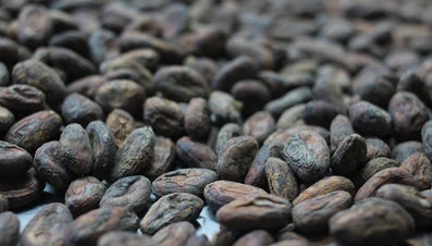 Where Does Chocolate Come From?