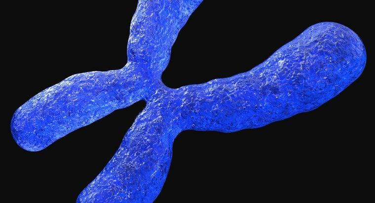 chromosomes-important