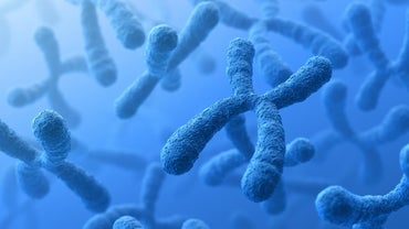 Where Are Chromosomes Located?