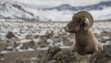 In What City Is Yellowstone National Park?