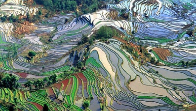 What Is the Best Climate for Growing Rice?
