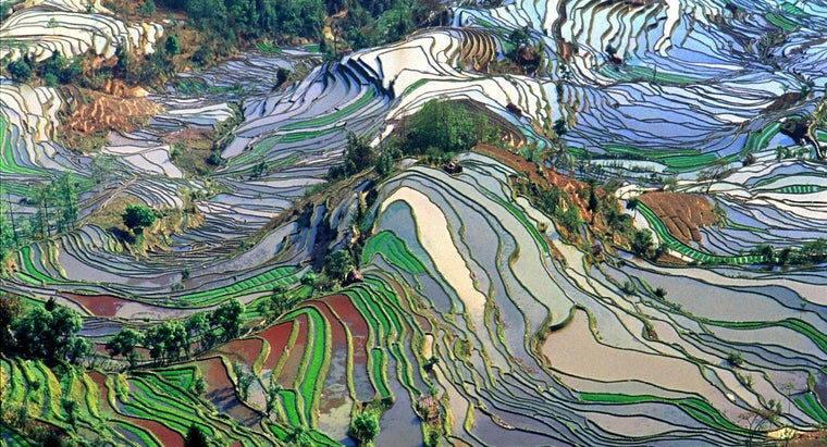 climate-growing-rice