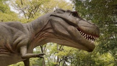 What Is the Closest Relative of the Tyrannosaurus Rex?
