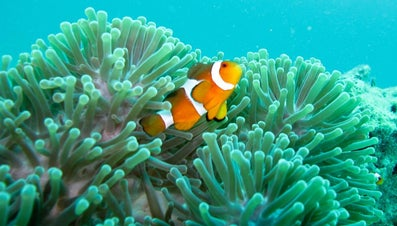 Where Do Clownfish Live?