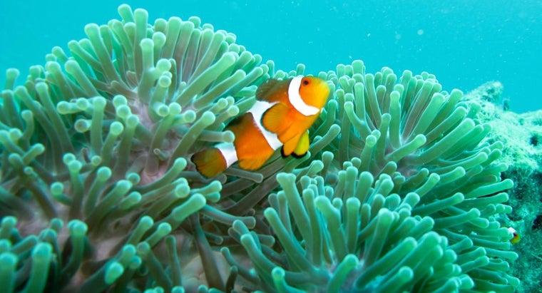 clownfish-live