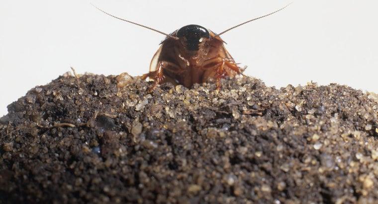cockroaches-look-like