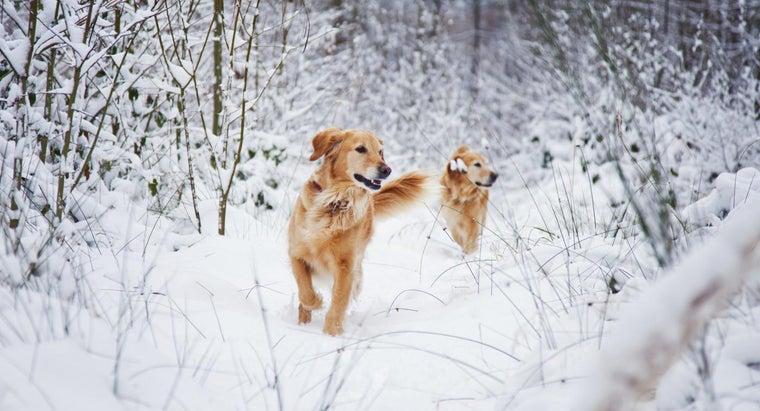 cold-leave-dog-outside
