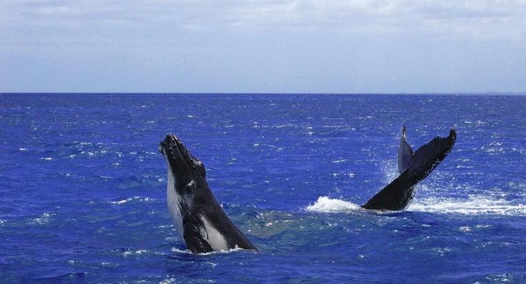 collective-noun-group-whales
