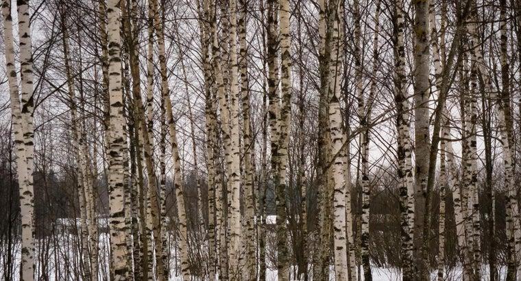 color-birch