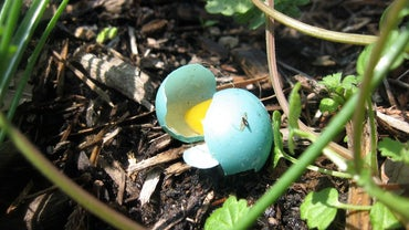 What Color Are Blue Jay Eggs?