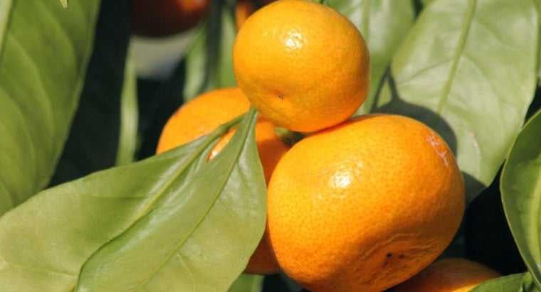 color-green-orange-make