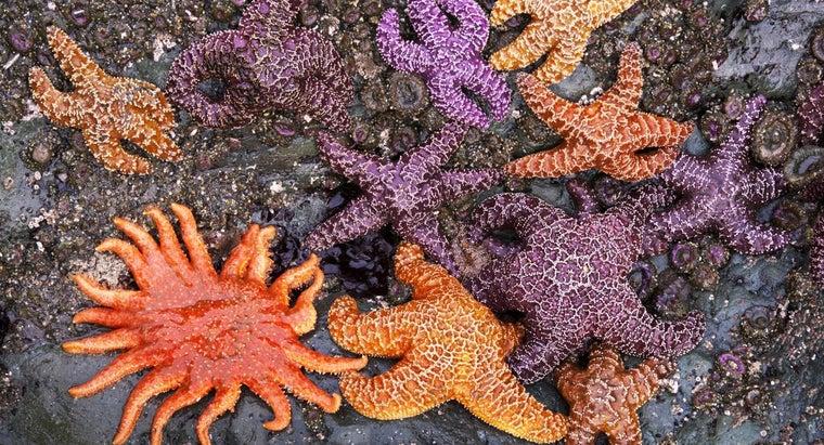 color-starfish