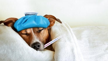 What Are Some Common Causes of Dog Diarrhea?