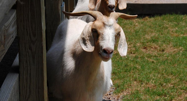 common-types-goats-alabama