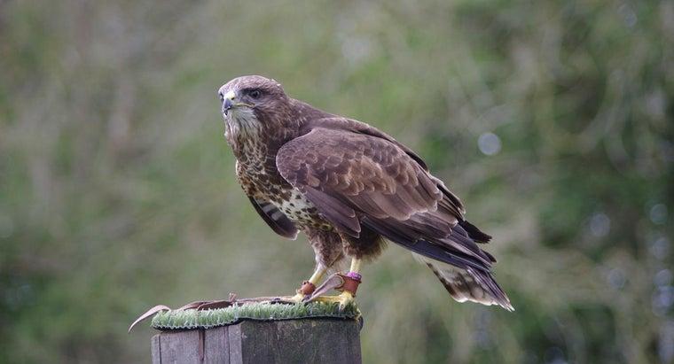 compare-buzzard-vs-vulture