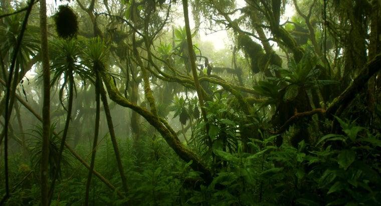 climate-congo-rainforest-like