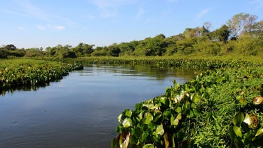 On What Continent Is the Amazon River Located?