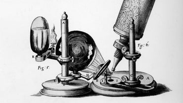 What Was the Contribution of Robert Hooke?