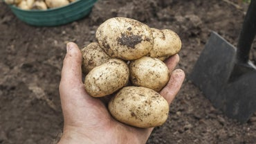 What Is Conventional Farming?
