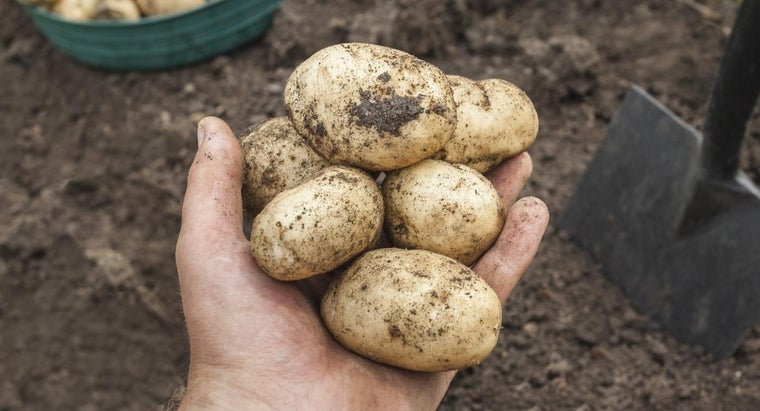conventional-farming
