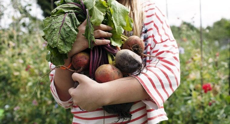 cook-raw-beets-garden
