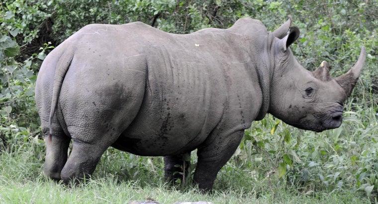 cool-animals-africa