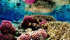 Why Are Coral Reefs Endangered?