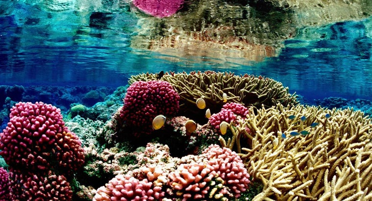 coral-reefs-endangered