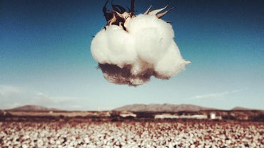 What Is Cotton Made Out Of?