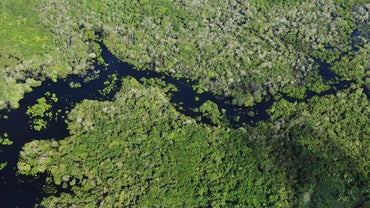 What Countries Contain the Amazon Rainforest?