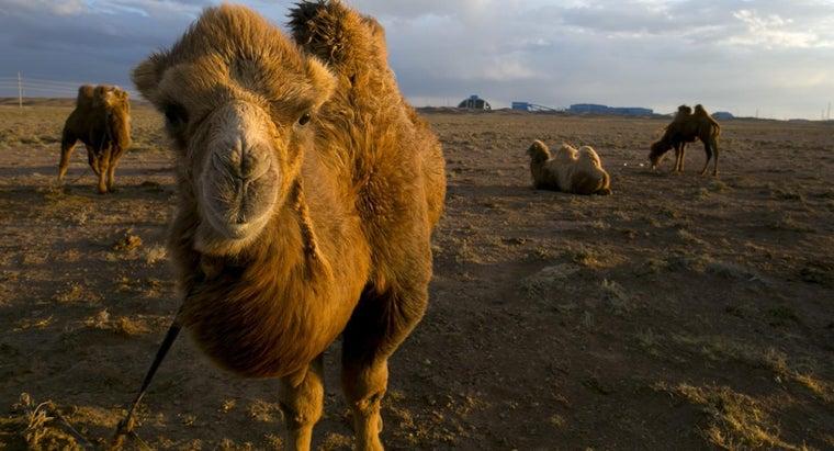 country-gobi-desert