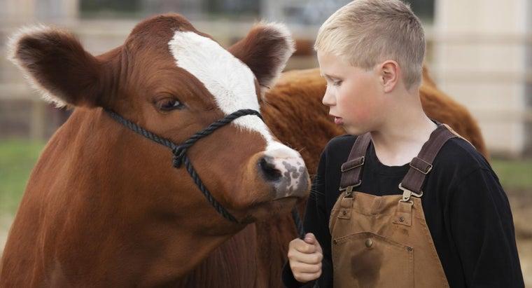 cows-top-teeth
