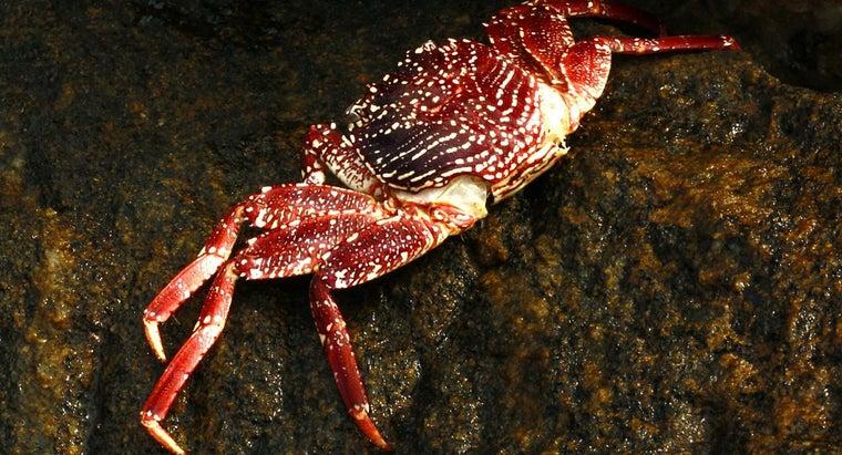 crabs-brains