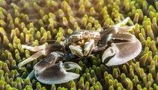 How Do Crabs Breathe?