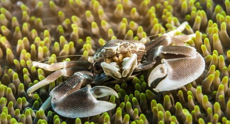 crabs-breathe
