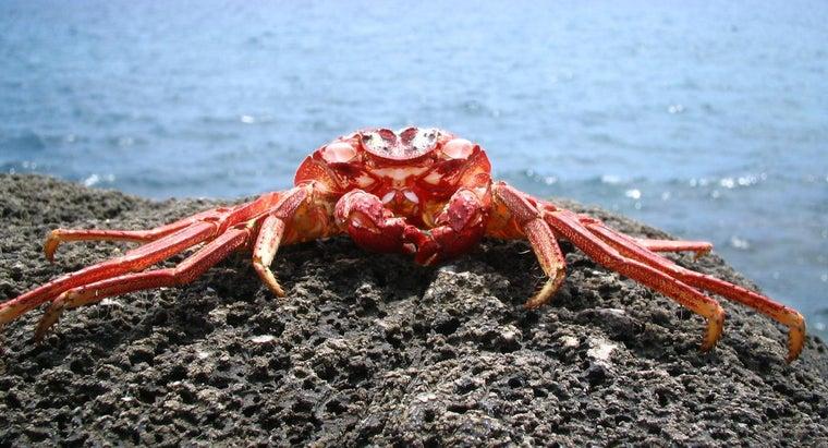 crabs-eat