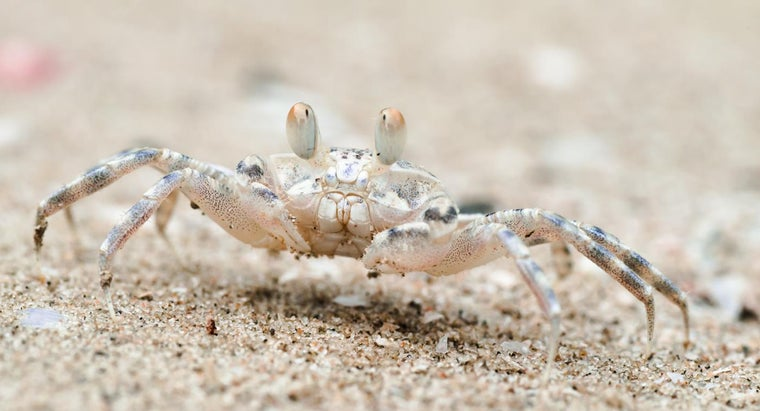 crabs-lay-eggs