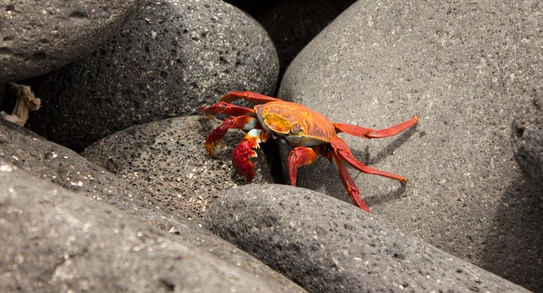crabs-protect-themselves