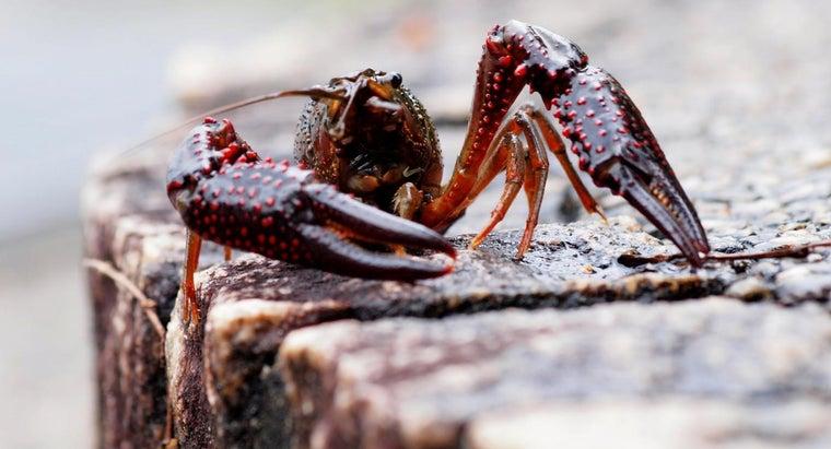 crayfish-molt