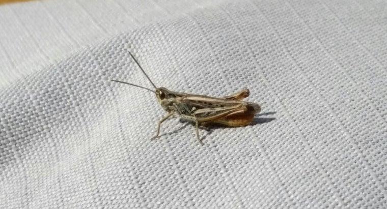 crickets-live
