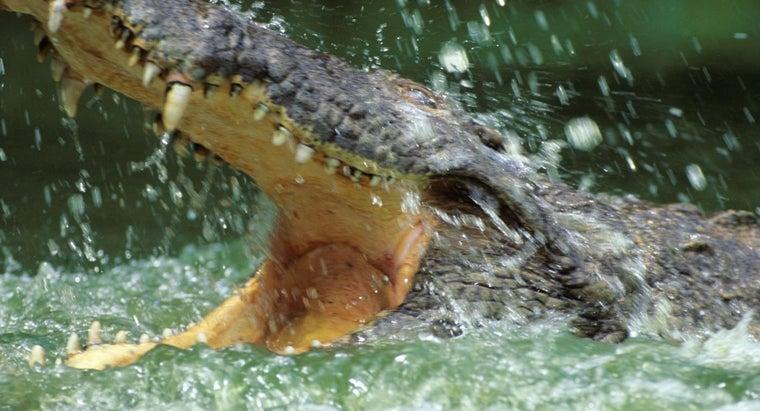 crocodiles-live-water