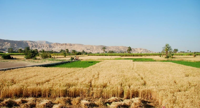 crops-grown-egypt
