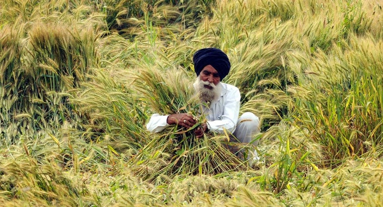 crops-grown-india