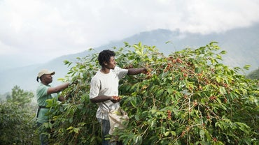 What Crops Are Grown in Jamaica?