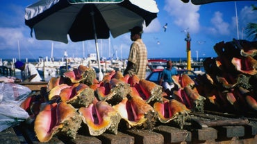 What Currency Is Used in Nassau in the Bahamas?