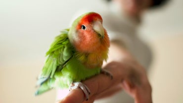 What Are Some Cute Names for Pet Birds?